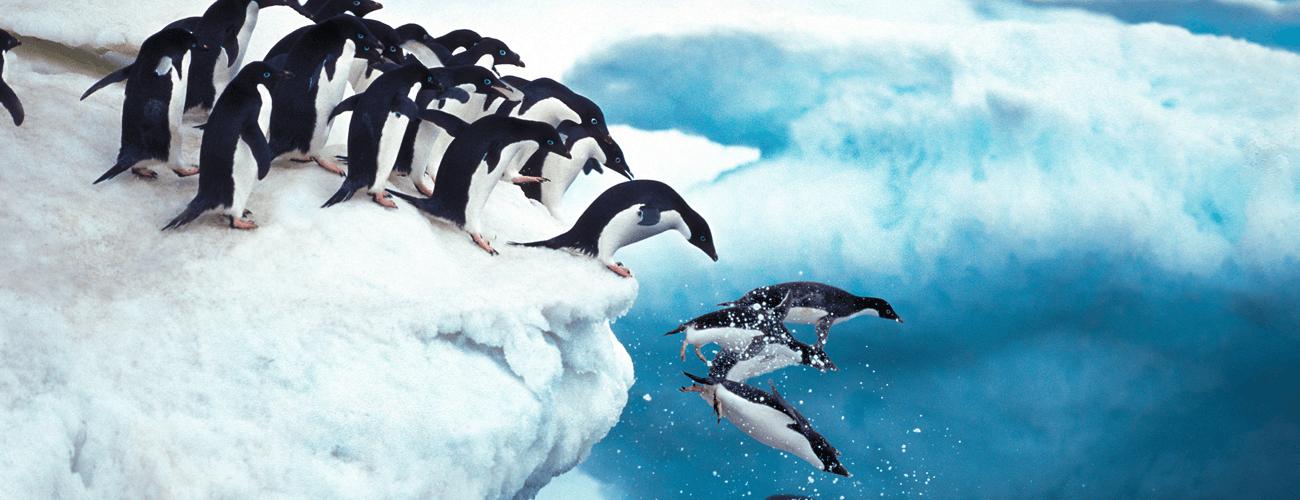 ペンギンアップデート
